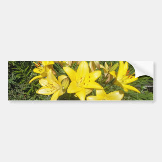 Blooming Yellow Flowers Bumper Sticker