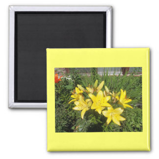 Blooming Yellow Flowers Square Magnet