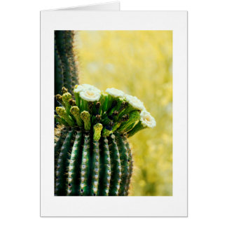 blooms of a Saguaro Card