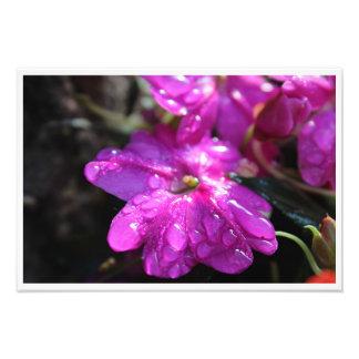 "Blossom 19"" x 13"" Photo Print (High Quality)"