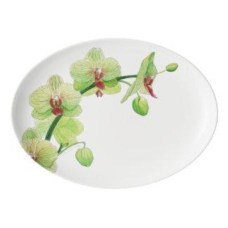 Blossom Beauties Platter - Green Orchid