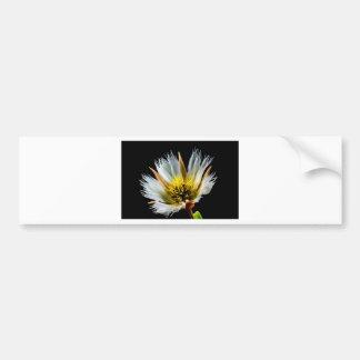 Blossom Bumper Sticker
