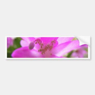 Blossom Bumper Stickers