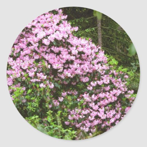 Blossom-covered Pink Shrub flowers Sticker