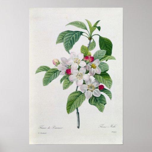 Blossom, from 'Les Choix des Plus Belles Print