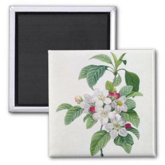 Blossom, from 'Les Choix des Plus Belles Square Magnet