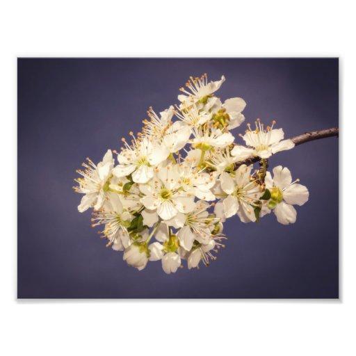 Blossom Art Photo