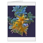 Blossoming Aeonium Card