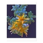 Blossoming Aeonium Post Card