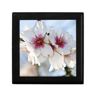 Blossoming almond flower gift box
