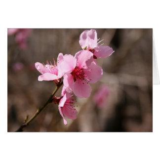 Blossoming Azalea Card