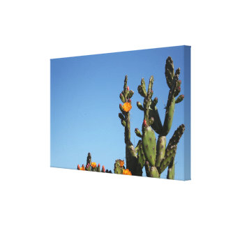 Blossoming Cactus Plant Stretched Canvas Print