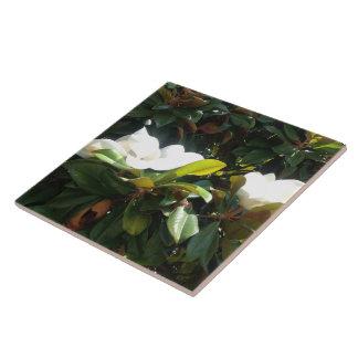 Blossoming Magnolia Tree Large Square Tile