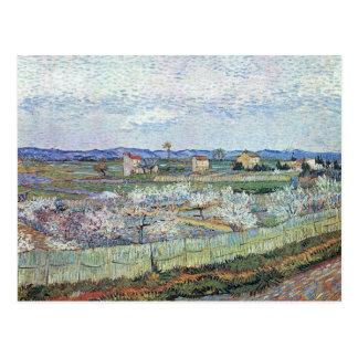 Blossoming Peach trees at La Crau by van Gogh Postcard