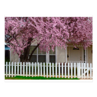 Blossoming Tree in the Suburbs Postcard