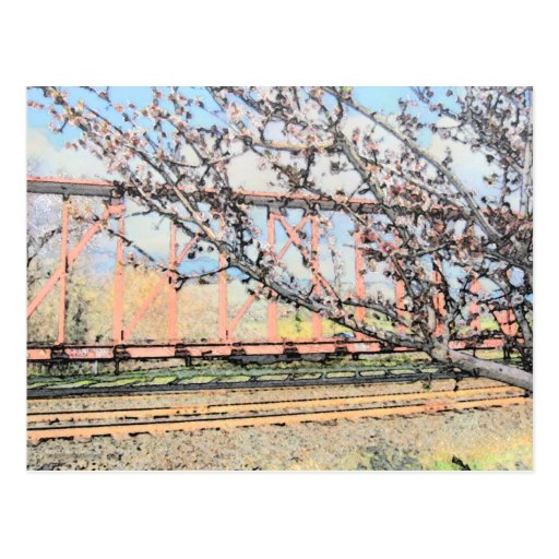Blossoms and Train Car Post Card