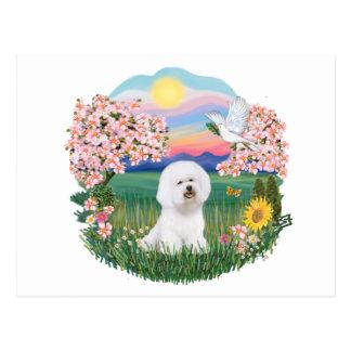 Blossoms - Bichon Frise 1 Post Cards