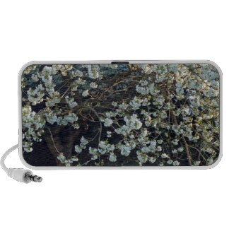 Blossoms Branches Tree Park Spring Flowers Forest Travel Speaker