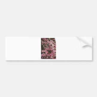 Blossoms Bumper Sticker