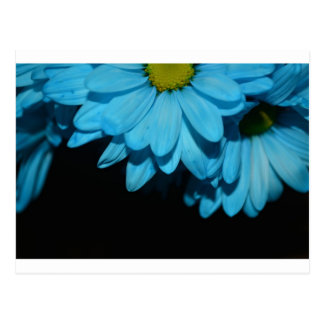 Blossoms Daisy Flowers Peace Love Nature Destiny Postcard