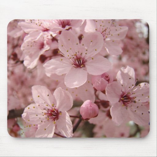 Blossoms mousepad Pink Spring Tree blossoms