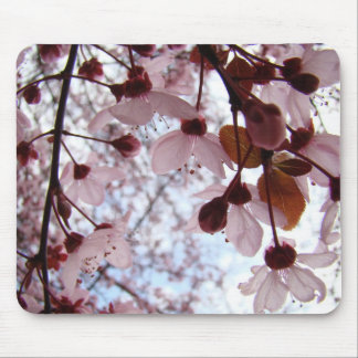 BLOSSOMS MOUSEPADS Pink Tree Blossoms Mousepad