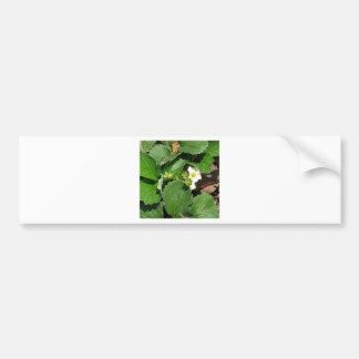 Blossoms of strawberry bumper sticker