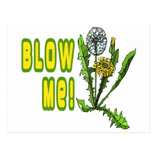 Blow Me Dandelion Postcards