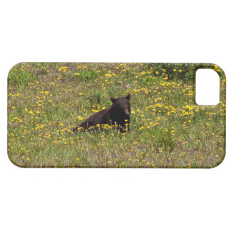 BLST Black Bear Snack Time iPhone 5 Case