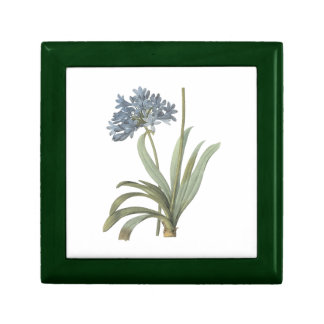 blue African lily(Agapanthus) by Redouté Trinket Box
