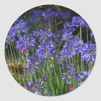 Blue Agapanthus Flowers Sticker