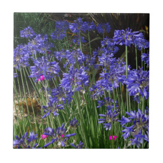 Blue Agapanthus Flowers Tile