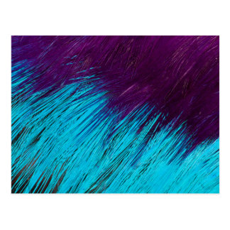 Blue An Purple Feather Abstract Postcard