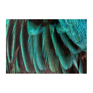 Blue And Black Feather Design Acrylic Wall Art