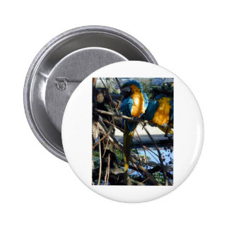 blue and gold macaw pinback button