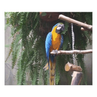 Blue and Gold Macaw Bird Photograph