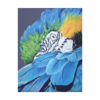 Blue and Gold Macaw Gallery Wrapped Canvas