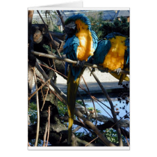 blue and gold macaw cards