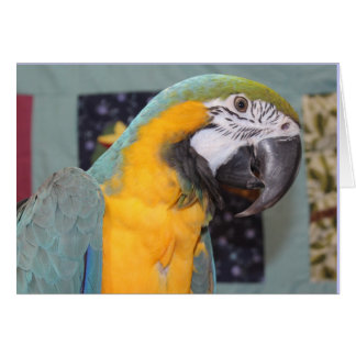 Blue and gold macaw note card