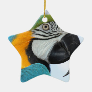 Blue and Gold macaw Ceramic Star Decoration