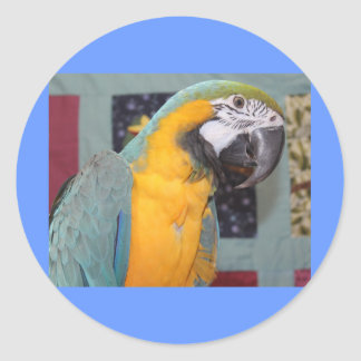 Blue and Gold Macaw Classic Round Sticker