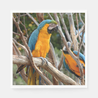 Blue And Gold Macaw Disposable Serviettes