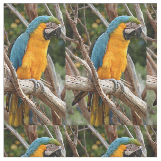 Blue And Gold Macaw Fabric