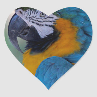 Blue and Gold Macaw Heart Sticker