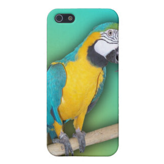Blue and Gold Macaw iPhone4 Case iPhone 5 Covers