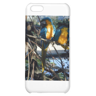 blue and gold macaw iPhone 5C case