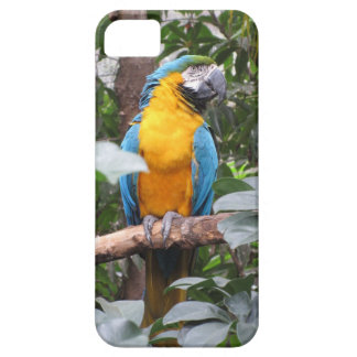 Blue and Gold Macaw iPhons 5S case Case For The iPhone 5