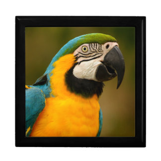 blue and gold macaw keepsake boxes