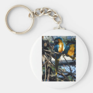 blue and gold macaw key chains