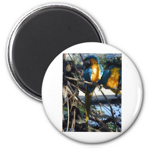 blue and gold macaw refrigerator magnet